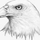 EagleFire