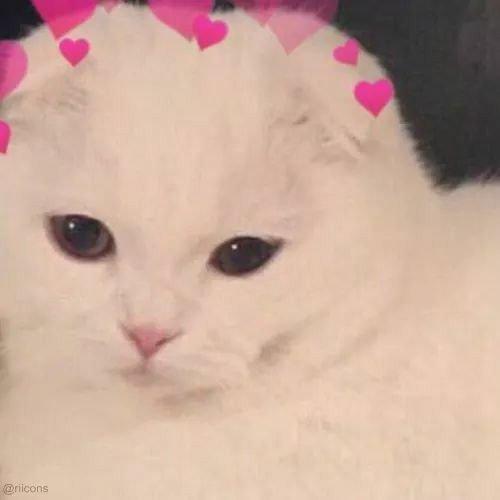 cat1.jpg.29e89a73b2d65d001c9b1af568b10b76.jpg